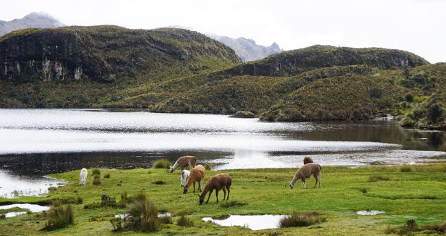 A trip to Cajas National Park in Ecuador